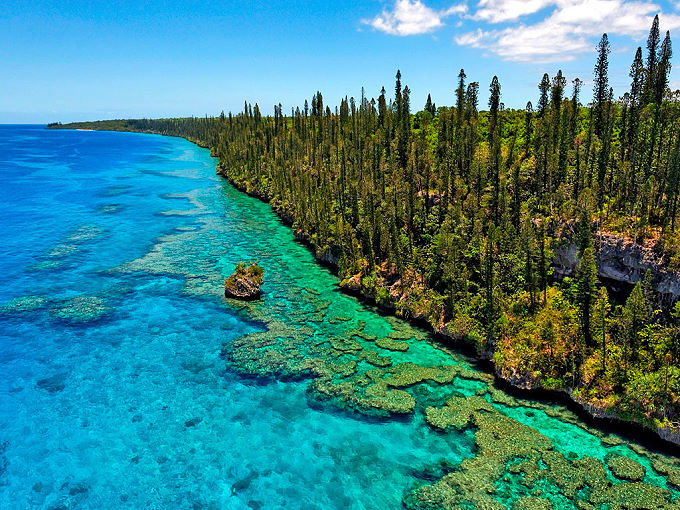 Cliff and Column Pines, Lifou, New Caledonia, Pacific Ocean