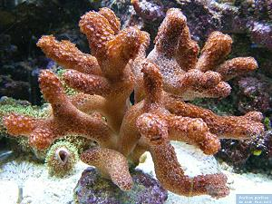 Finger Corals, lagoon and reef