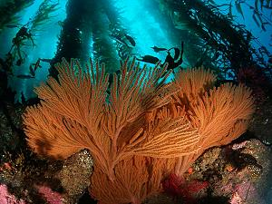 Gorgone corals, lagoon and reef