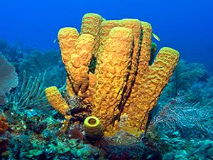 Tube corals, lagoon and reef