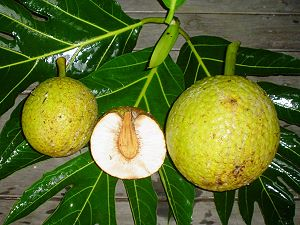 Breadfruit